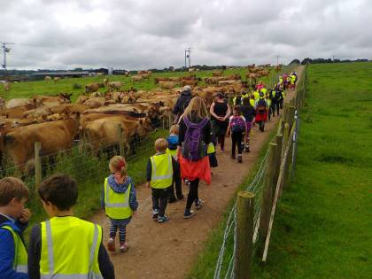 The cows came to greet the walkers