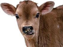 Abbott Lodge Jersey Calf